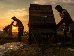 Petani Didorong Manfaatkan Sistem Resi Gudang