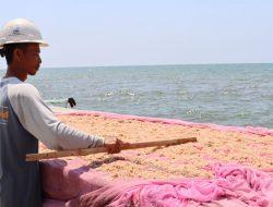 Nelayan Mulai Panen Udang Rebon