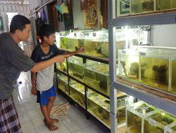 Budidaya Ikan Hias, Hobi Jadi Peluang Rezeki