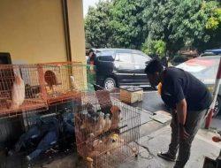 Ratusan Satwa Dilindungi di Solo  Diamankan