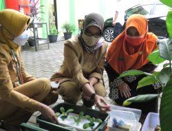 Pelatihan Hidroponik Bagi Kelompok Perempuan Rentan